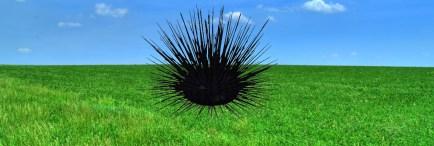 grassy field 2
