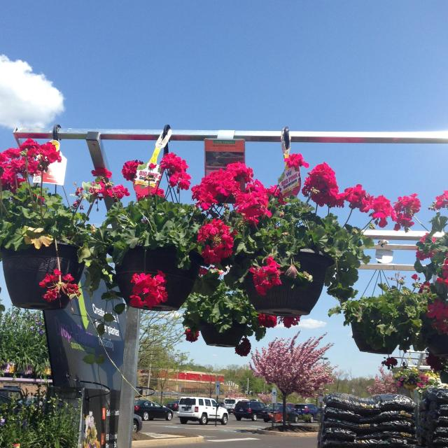 more flowers at home depot