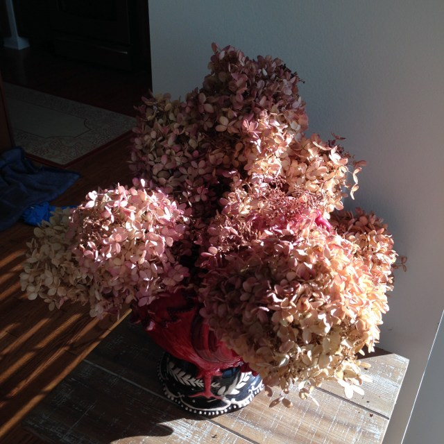 Dried hydrangea from one of Bonapartes clients gardens.  Freebie!
