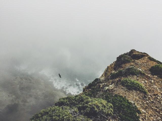 lone bird flying