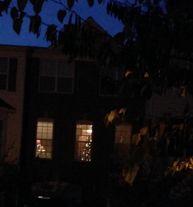 Christmas tree across the street 2