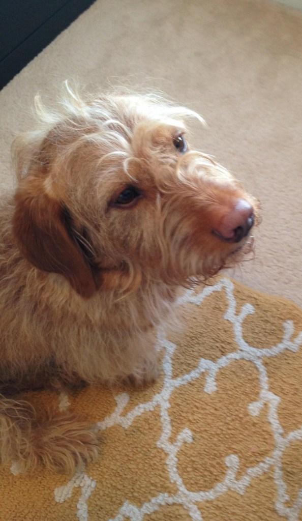 Chippy seeks forgiveness