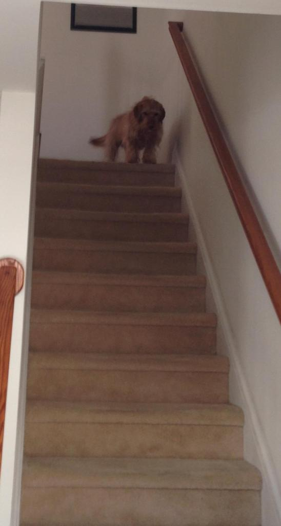 the dog at the top of the stairs