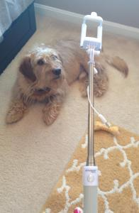 Selfie Stick. Or Chew toy for Chippy.