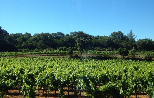 L'estagnol. Leoube vineyards.