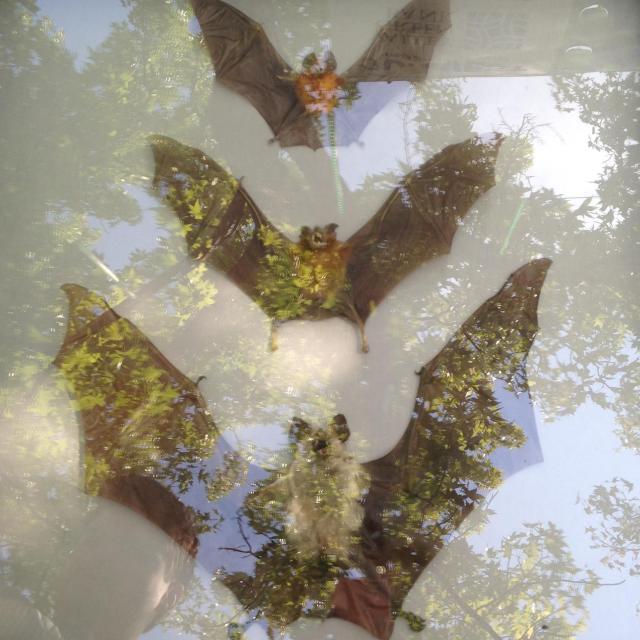 Bats from fine arts a flutter