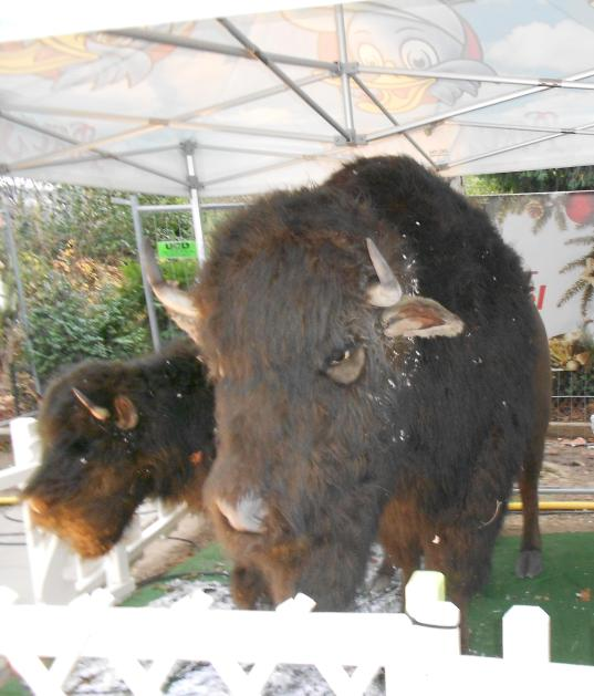 christmas-marche-bison-they-are-not-real