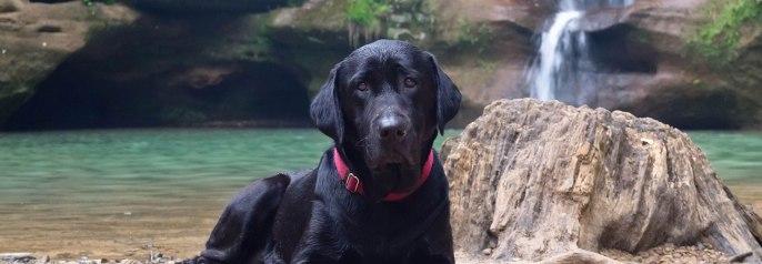 Andy, le chien de Galen Stoller, devait ressembler à celui-ci