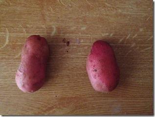 comparatif pommes de terre en pot et pleine terre