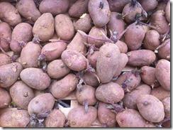 pommes de terre rose de France