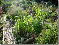 jardin diversifié