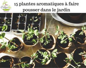 15 plantes aromatiques à avoir dans le jardin