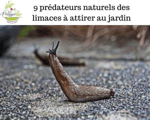 Prédateurs naturels des limaces