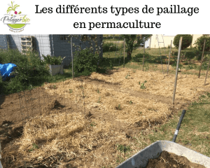 Quels paillages au potager