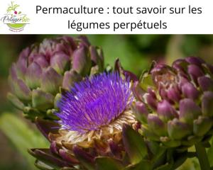 Tout savoir sur les légumes perpétuels en permaculture