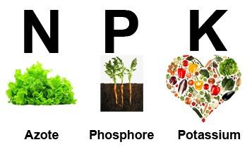 NPK, azote, phosphore et potassium