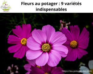 fleurs potager et variétés