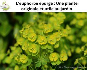 Euphorbe épurge