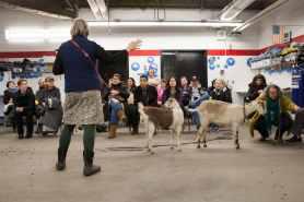 goats teaching