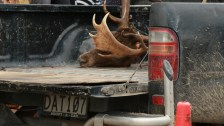 Film Still. Transporting kills, red stag