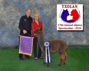 Alpacas for Sale — Storm's first Color Banner!