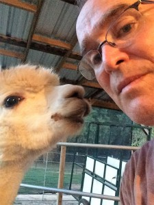 Advantages of Alpacas — They are approachable