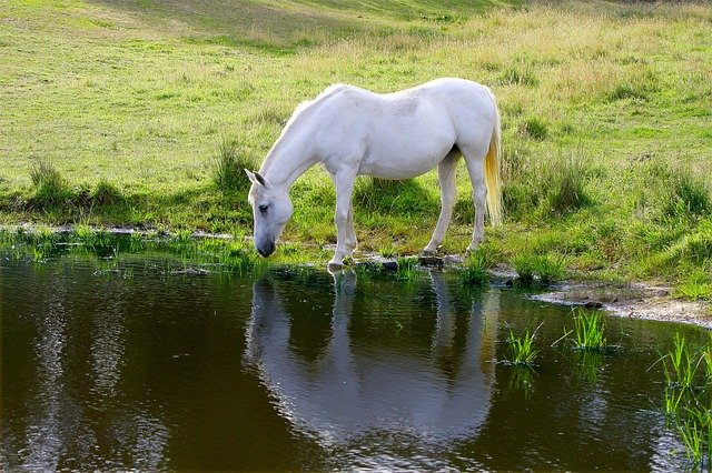 Tips To Keep Your Horse Hydrated In The Heat