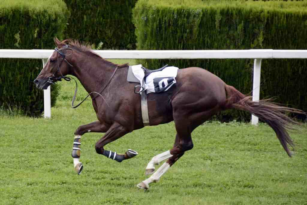 fastest horse breed