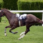 What Is The Fastest Horse Breed In The World?