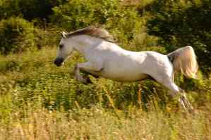 Male Horse Facts 2020 – Terminology And Meanings