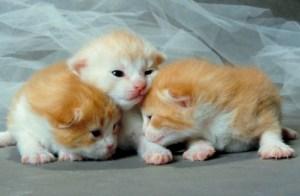 Heartworms in Kitten - Heatlhcare at Auburn