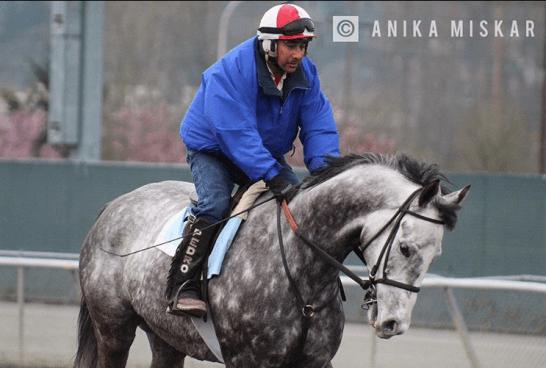emerald downs, seattle horse racing, auburn wa race track, horse racing, anika miskar, jokey pedro