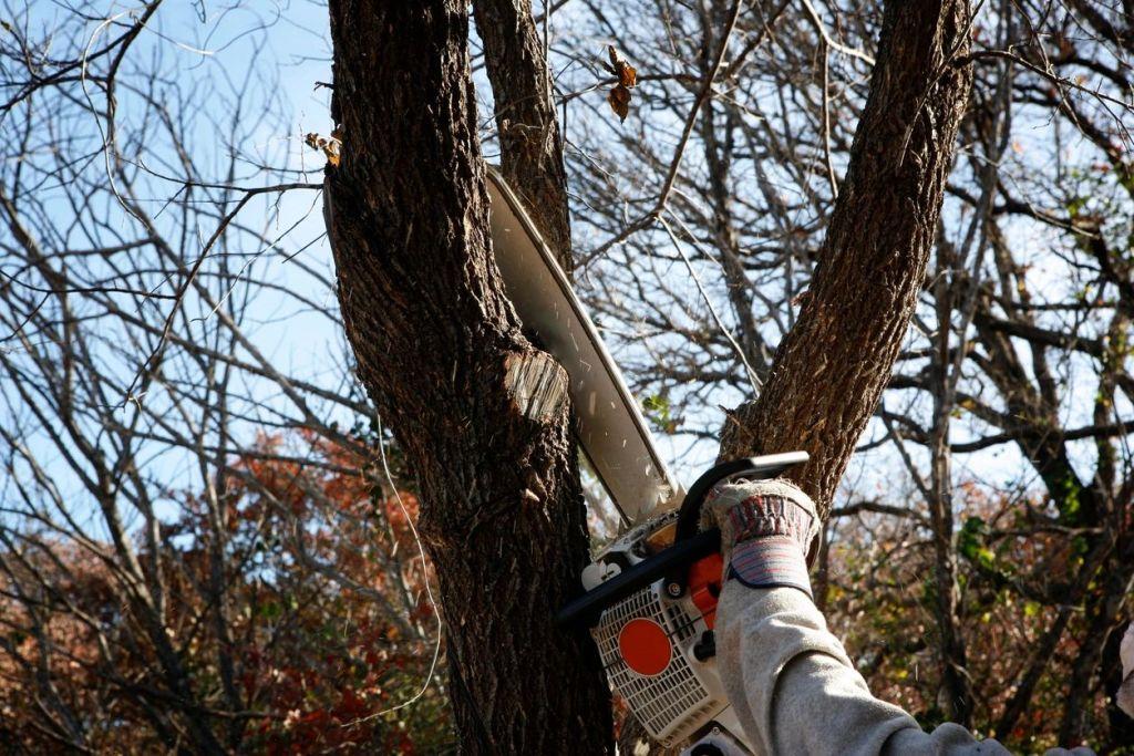 tree cutting, tree trimming, city of auburn