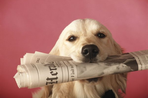 doggo, beyond auburn, auburn wa, city of auburn, washington's most wanted, caps canines