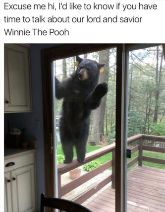 bear, lea hill bear, auburn bear, black bear, wa black bear,