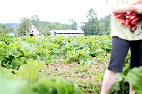 Mosby farms, farmers feeding families act, farms and food banks, auburn farm, Washington farm, auburn wa farm, federal farming aide, covid-19 farm aide, schrier farm package,