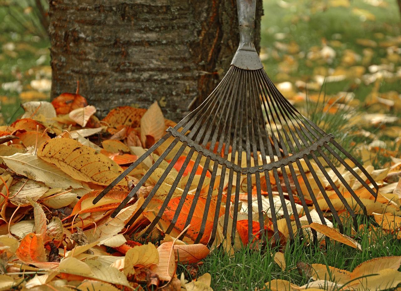 fall, autumn, rake, leaves, yard work, yardwork, fire prevention yard work