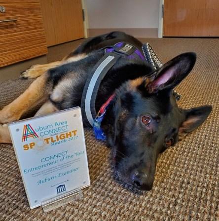 auburn examiner, ae mascot Six, service dog Six, auburn area chamber of commerce spotlight award