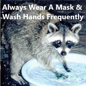 a racoon with its paws in a basin of water. The meme advises to always wear a mask and wash your hands frequently.