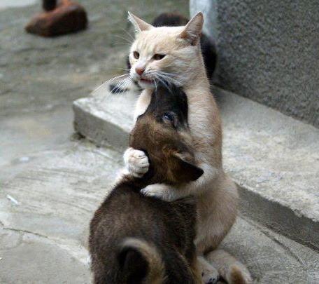 Nos actions pour les chats