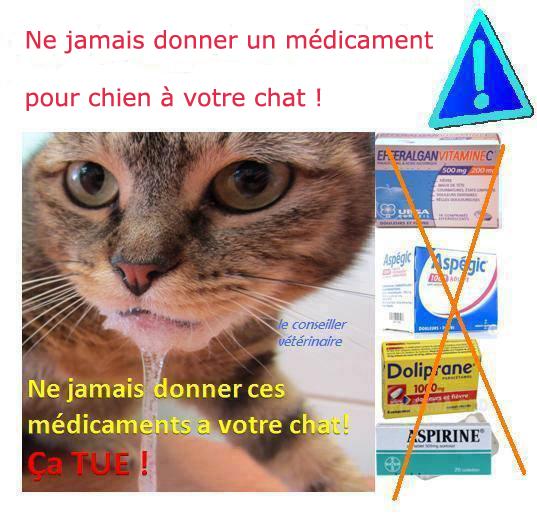 médicament chien chat