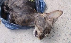 Justice pour la mise à mort par noyade d'une chatte