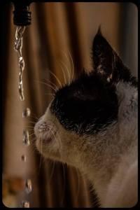 Chat qui boit au robinet