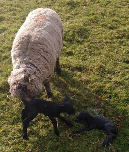 Iona and Ethel just born