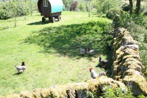 Extensive chicken run