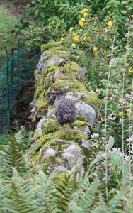 chick patrolling wall
