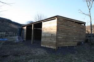 lambing shed evening sun