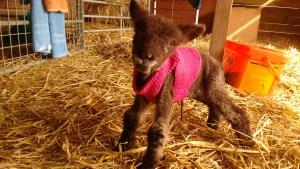 Yogi 1 day old