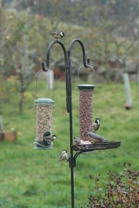 birds at feeding station