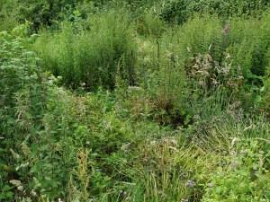 veggie patch overgrown